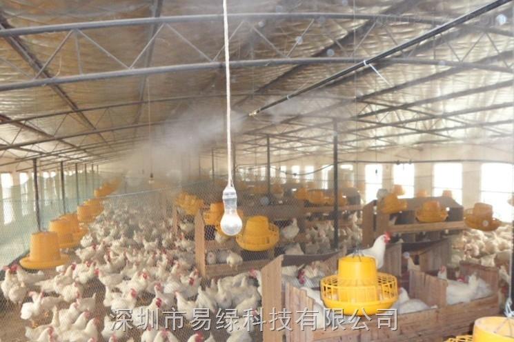 养鸡场鸡棚鸡舍喷雾降温喷雾投药喷雾加湿自动喷雾机