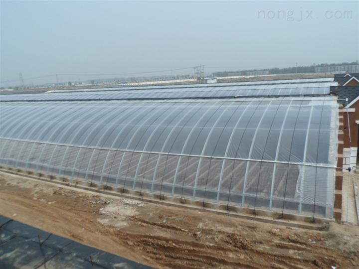 河北优质日光温室蔬菜大棚,日光节能温室大棚建设/造价